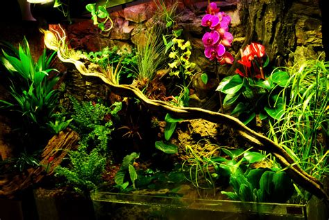 land and water aquarium the paludarium half aquarium half land the fpsbutest