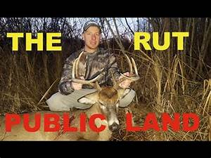 Public Land Bow Hunting Whitetail Deer During The Rut ...