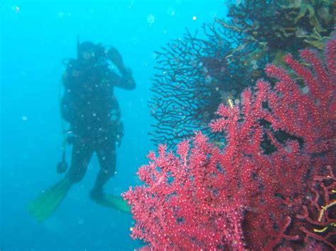 Isole Tremiti Hotel Gabbiano - la riserva marina naturale delle isole tremiti hotel