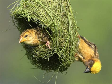 nest with birds pictures nest birds wallpapers entertainment only