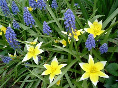 midwest gardening plant flowering bulbs