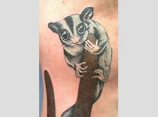 Sugarglidercom Gliderpedia Tattoo