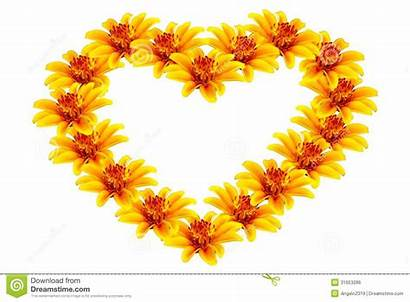 Heart Yellow Flowers Flower Background Shaped Isolated