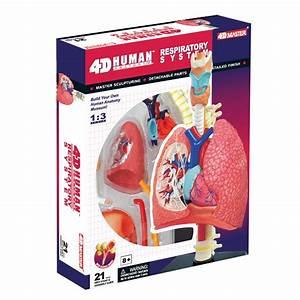 4d Human Anatomy