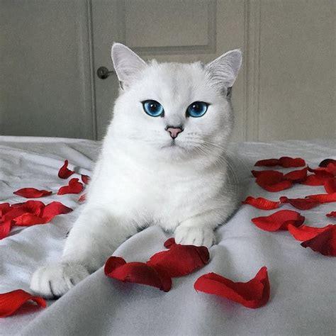 si鑒e du journal le monde coby le plus beau du monde a les yeux bleus