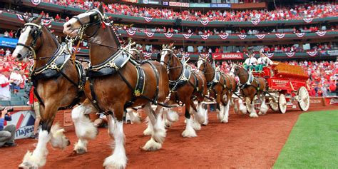 budweiser cans clydesdales  edm zombies  jay