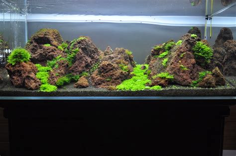 Lava L Fish Tank Petsmart by 화산석 레이아웃