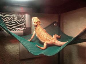 Lizard Hammock by Reptile Hammock Breathable Mesh Bearded Lizard
