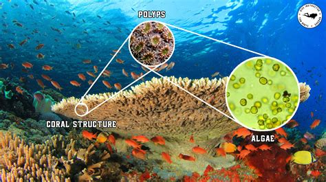animals plants corals coral algae reef