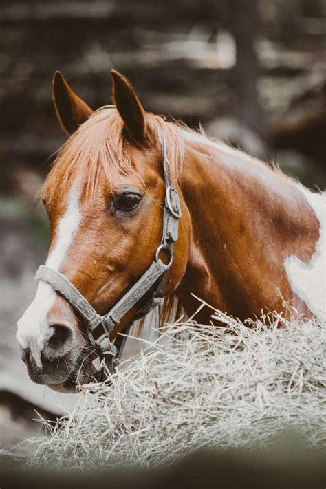 riding horseback pony ranch painted experience around forward ruggiero lake face george