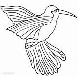 Hummingbird Coloring Printable Cool2bkids Drawing Bird Humming Template Sheets Birds Templates Wings Colorings Getcolorings Adult sketch template