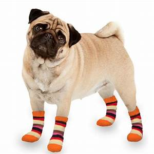 Video Pour Chien : chaussette pour chien chaussette chien ~ Medecine-chirurgie-esthetiques.com Avis de Voitures