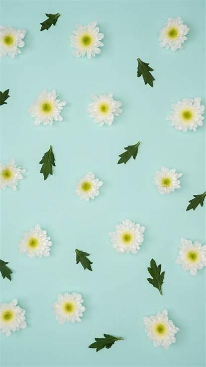Pastel Minimalism Iphone Wallpapers Leaves Minimalist Chamomile