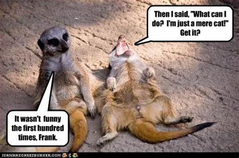 Mere Cat Meme - credit union think tank my credit union zoo