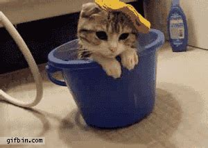 cute kitten  washing bowl  funny gifs updated daily