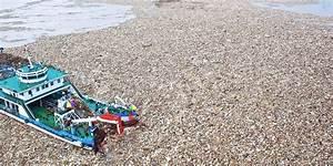 Teppich 2 X 3 M : gefahr f r mensch und natur ein teppich aus plastik ergie t sich ins meer berliner zeitung ~ Bigdaddyawards.com Haus und Dekorationen