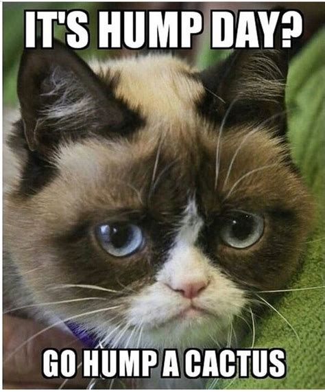 Wednesday Memes Dirty - funny dirty cat memes dirty funny memes best of the best