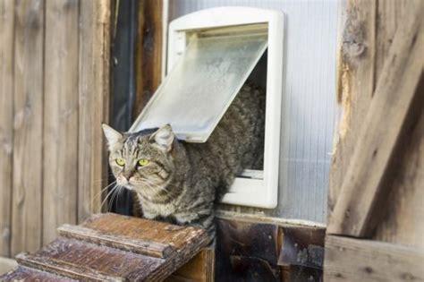 ratgeber zu katzenklappen mehr freiheit dank katzenklappe