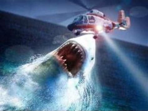 real megalodon shark evidenceproof  megalodon caught