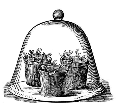 vintage garden clip art glass cloche  pots