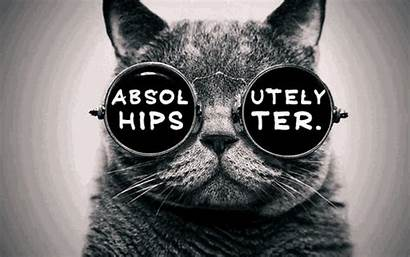 Hipster Gato Hipsters Gafas Trendy Gifs Tenor