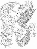 Coloring Pages Printable Adult Hummingbird Gorgeous sketch template