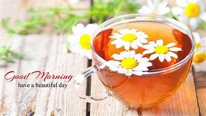Morning Flowers Tea Flower Background Gud Wallpapers