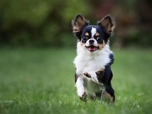 cute small medium dog breeds