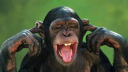 Monkey Face Wallpapers Type Screen