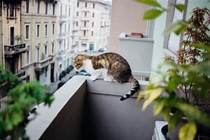 Gekippte Fenster Sichern : den balkon katzensicher machen ~ Michelbontemps.com Haus und Dekorationen
