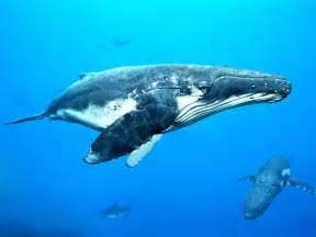 クジラ:鯨 / クジラ - GATAG|フリー画像・写真素材集 4.0