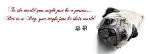 dogs quotes facebook covers  weneedfun