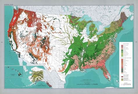 Major Forest Types in the U S Geography map
