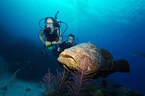grouper goliath fl sun hook better