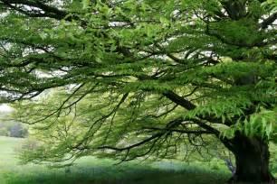 high beeches gardens a beautiful tree
