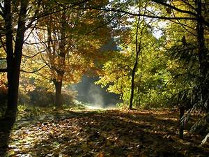 Your Seattle Parks Fall Bucket List - Parkways  Fall