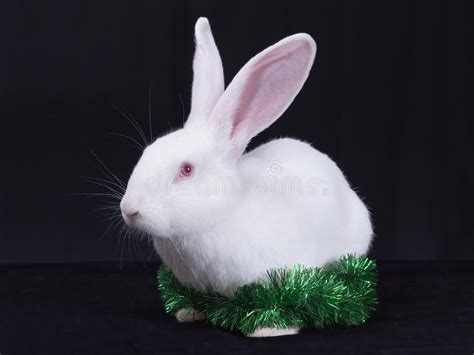 bunny  christmas decorations stock image image