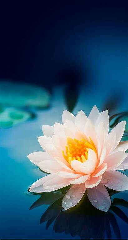 Flower Iphone Flowers Backgrounds Nature Lotus Wallpapers