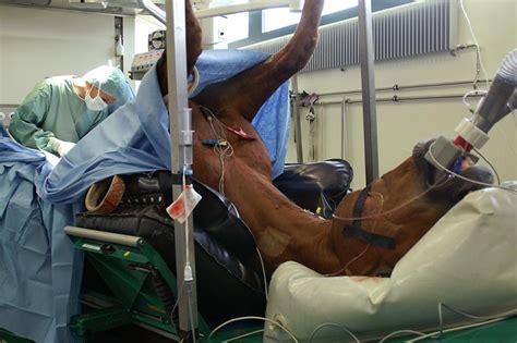 pferde op versicherung die illtal makler illingen