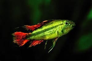 Aquarium Fische Süßwasser Liste : neuer fisch im aquarium foto bild tiere haustiere aquaristik bilder auf fotocommunity ~ A.2002-acura-tl-radio.info Haus und Dekorationen