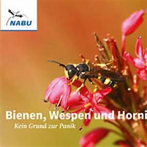 Bienen Und Wespen : literatur ~ Whattoseeinmadrid.com Haus und Dekorationen