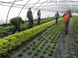 Apprentice organic growers sought for internship programme ...