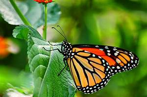 35 Most Beautiful Butterfly Pictures | Incredible Snaps