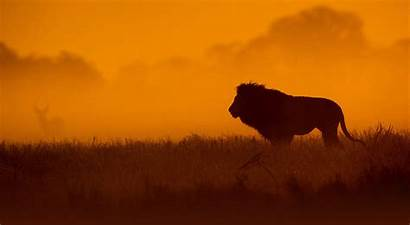 Safari Background African Tails Backgrounds Adventures Africa