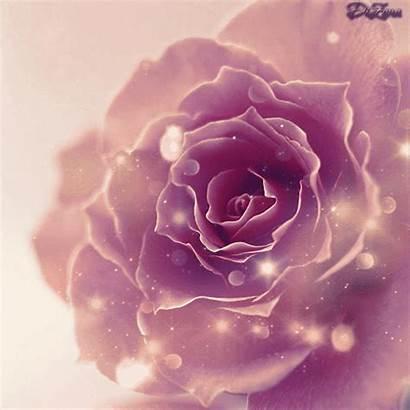 Roses Animated Rose Gifs Animation Purple Flower