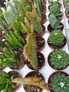 Cactus, Búsqueda and Google on Pinterest