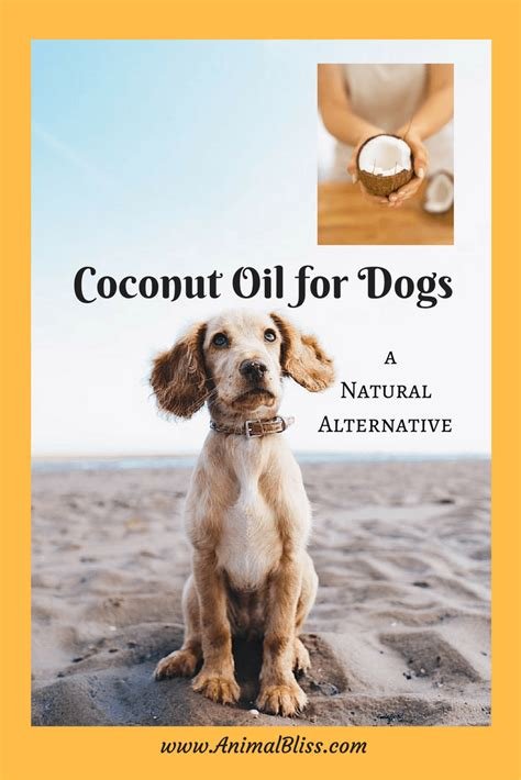 coconut oil  dogs providing  natural healthy