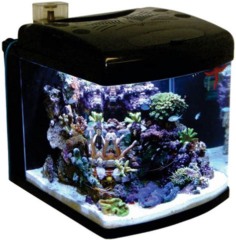 10 top tips for setting up a nano tank