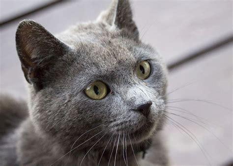 nombres  gatas  gatitas originales
