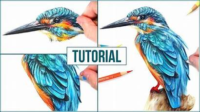 Realistic Bird Drawing Draw Step Coloured Tutorial